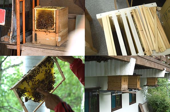 栂池養蜂講座